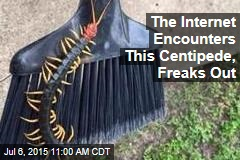 The Internet Encounters This Centipede, Freaks Out