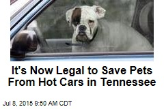 It's Now Legal to Save Pets From Hot Cars in Tennessee