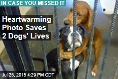 Heart-Warming Photo Saves 2 Dogs' Lives