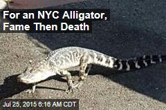 For an NYC Alligator, Fame Then Death