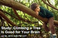 Study: Climbing a Tree Is Good for Your Brain
