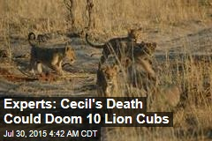 Experts: Cecil's Death Could Doom 10 Lion Cubs