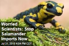 Worried Scientists: Stop Salamander Imports Now