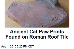 Ancient Cat Paw Prints Found on Roman Roof Tile
