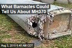 What Barnacles Could Tell Us About MH370