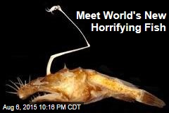 Meet World's New Horrifying Fish