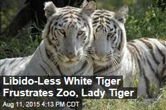 Libido-Less White Tiger Frustrates Zoo, Lady Tiger