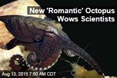 New 'Romantic' Octopus Wows Scientists