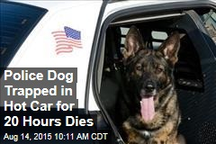 Police Dog Trapped in Hot Car for 20 Hours Dies