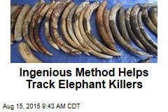 Ingenious Method Helps Track Elephant Killers