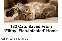 122 Cats Saved From 'Filthy, Flea-Infested' Home