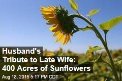 Husband's Tribute to Late Wife: 400 Acres of Sunflowers