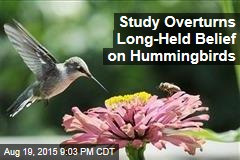 Study Overturns Long-Held Belief on Hummingbirds