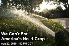 We Can't Eat America's No. 1 Crop