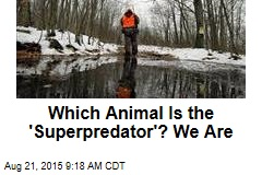Which Animal Is the 'Superpredator'? We Are