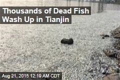 Fish Near Tianjin Blast Site Are Dying Off