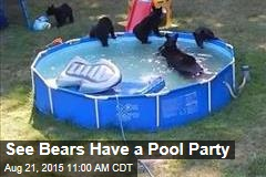 See Bears Have a Pool Party