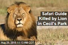 Safari Guide Killed by Lion in Cecil's Park