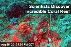 Scientists Discover Incredible Coral Reef