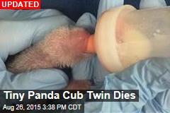 Tiny Panda Cub Twin Dies