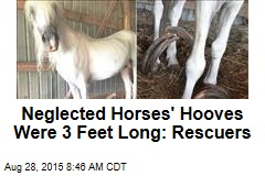 Neglected Horses' Hooves Were 3 Feet Long: Rescuers