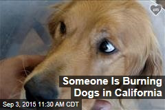 Someone Is Burning Dogs in California