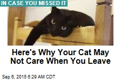 Here's Why Your Cat May Not Care When You Leave