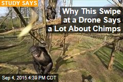 Why This Swipe at a Drone Says a Lot About Chimps