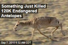 Something Just Killed 120K Endangered Antelopes