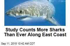 Study Counts More Sharks Than Ever Along East Coast