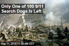 Only One of 100 9/11 Search Dogs Is Left
