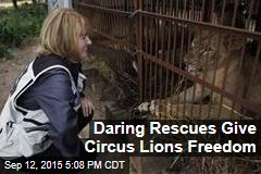 Daring Rescues Give Circus Lions Freedom