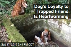 Dog's Loyalty to Trapped Friend Is Heartwarming