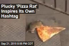 Viral Video Captures the 'Pizza Rat' in Action