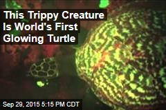 This Trippy Creature Is World's First Glowing Turtle