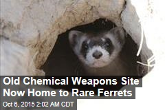 Old Chemical Weapons Site Now Home to Rare Ferrets