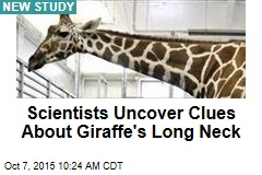Scientists Uncover Clues About Giraffe's Long Neck