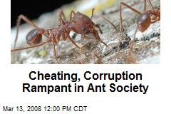 Cheating, Corruption Rampant in Ant Society