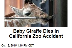 Baby Giraffe Dies in California Zoo Accident