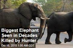 Hunter Pays $60K, Kills Huge Elephant
