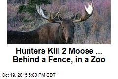 Hunters Kill 2 Moose ... Behind a Fence, in a Zoo