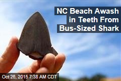 NC Beach Awash in Teeth From Bus-Sized Shark
