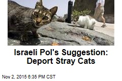 Israeli Pol's Suggestion: Deport Stray Cats