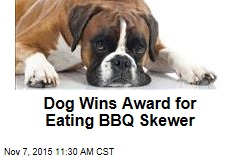 Dog Wins Award for Eating BBQ Skewer