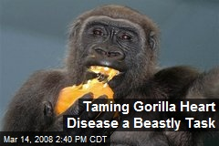 Taming Gorilla Heart Disease a Beastly Task