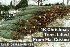 1K Christmas Trees Lifted From Fla. Costco