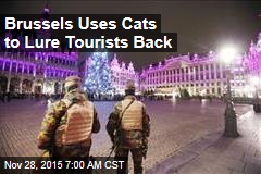 Brussels Uses Cats to Lure Tourists Back