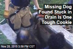 Missing Dog Found Stuck in Drain Is One Tough Cookie
