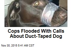 Cops Flooded With Calls About Duct-Taped Dog