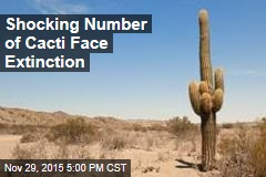 Shocking Number of Cacti Face Extinction
